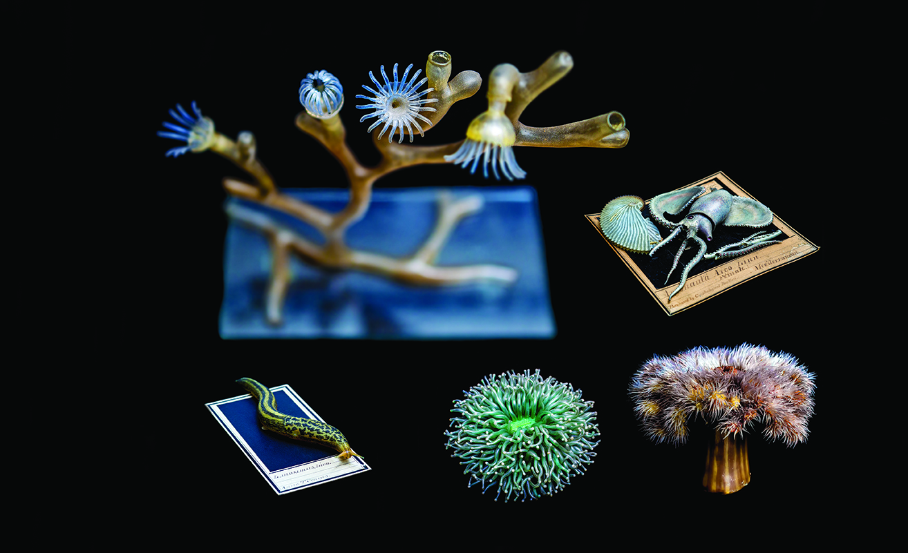 glass blown models of marine life from the 1800s